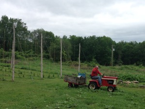 Cleaning up after a spring day in the hop yard, Dad is reluctant to smile for the camera.